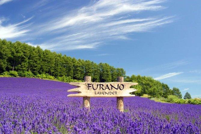 Furano and Biei Day Tour