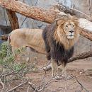 Skip the Line: San Diego Zoo and Safari Park Combo Tour Ticket