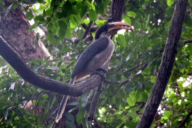 Birdwatching Trek in Sigiriya Countryside (Private 2-hour trek)