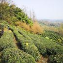 Off -the-Beaten-Track Tea Hill Walking Tour & Taoist-Temple Visit
