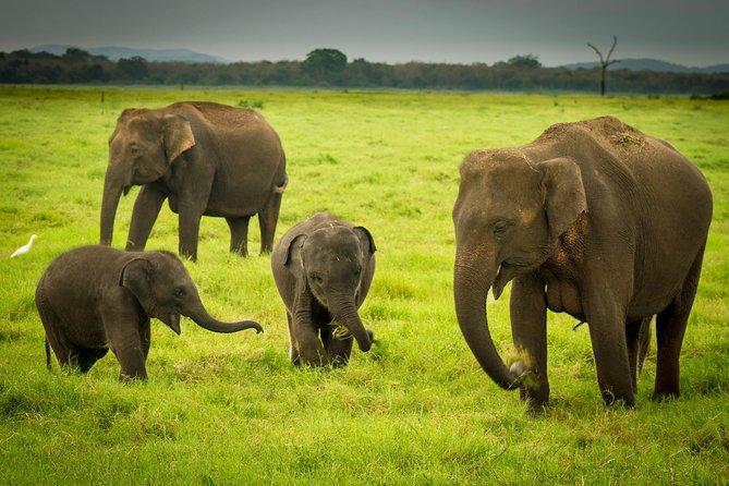 Udawalawe Safari Private Day Trip from Bentota and Kalutara Areas