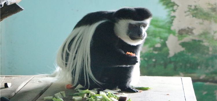 大連森林動物園3