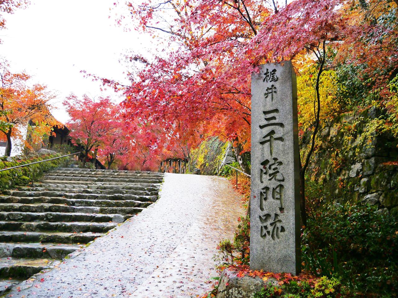 7-13人小團+京都奈良+嵐山+和歌山市一日遊(錯峰出行+避開人群高峰+臨空奧萊嗨購)