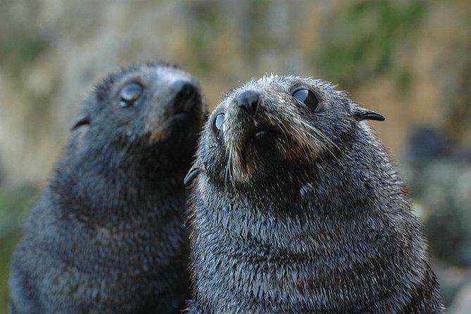 Otago Peninsula Wildlife Day Tour