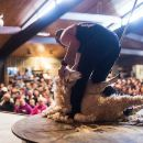 Agrodome Sheep Show and Farm Tour - Rotorua