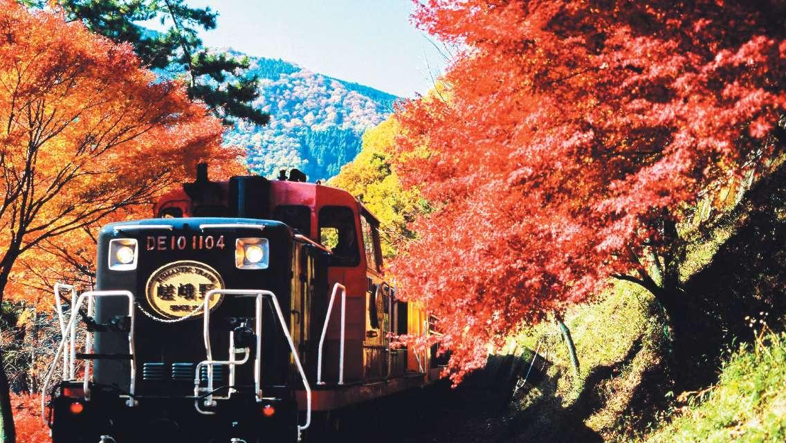 The Sagano Romantic Train + Arashiyama + Kiyomizu Temple + Fushimi Inari Shrine Day Tour