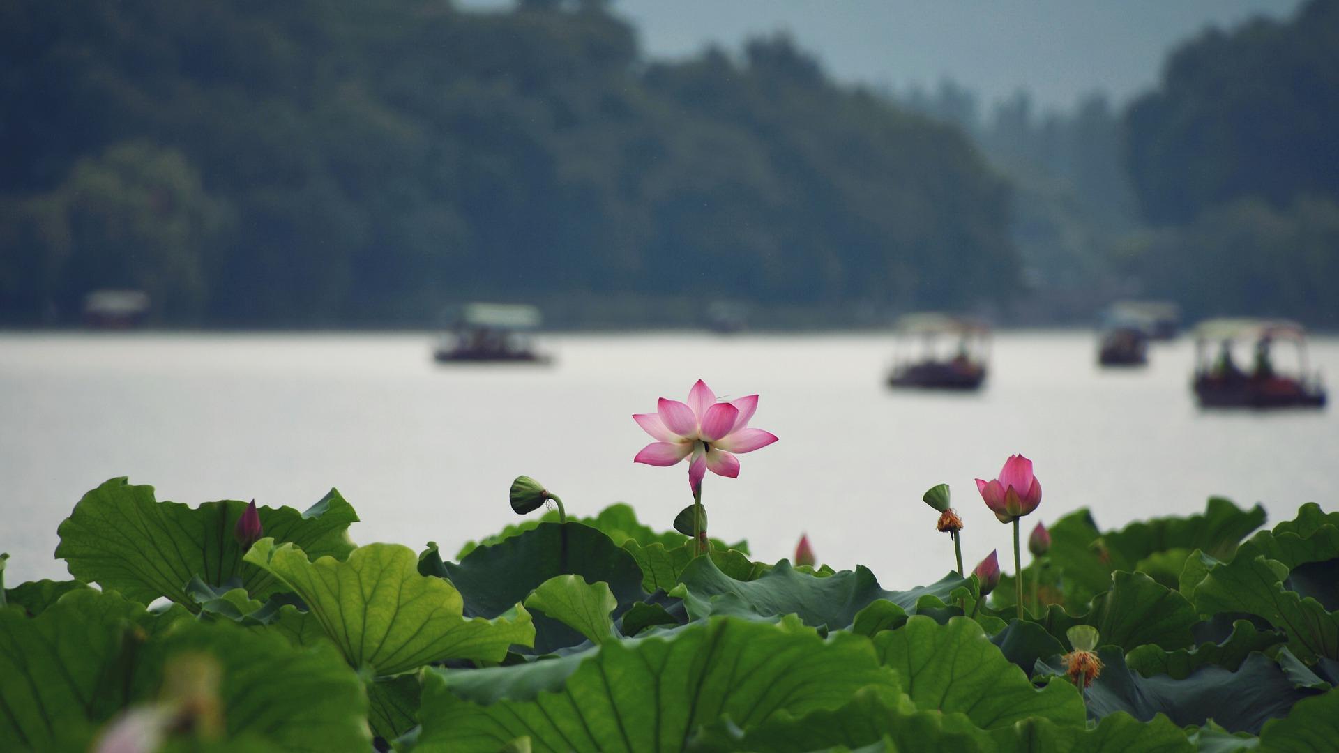 Small group departure-Zhejiang Hangzhou West Lake boatride, Tea Plantation