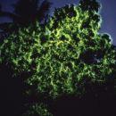 沙巴迪加島+雙層大船瑩河紅樹林+音樂晚餐+尋覓長鼻猴+夜觀螢火蟲一日遊