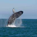 斯里蘭卡美蕊沙出海觀鯨半日遊(西南海濱上門迎接+雙層賞鯨船+早餐小食)