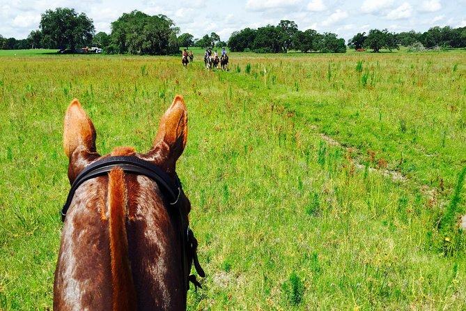 Adventurous Trail Horseback Riding Experiences