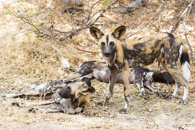 3 Days - Budget Safari To Selous