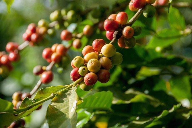 Coffee Roadtrip