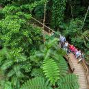 Daintree Rainforest, Cape Tribulation and Bloomfield Track Small Group Tour