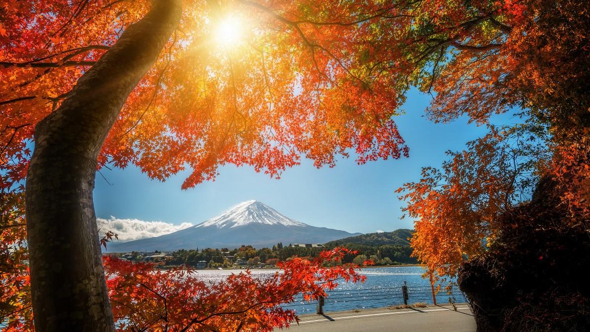 日本6-8天 Docomo 上網卡(日本東京、大阪、北海道、名古屋機場自取)