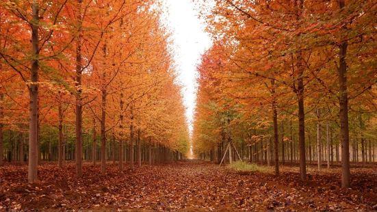 紅楓林景區