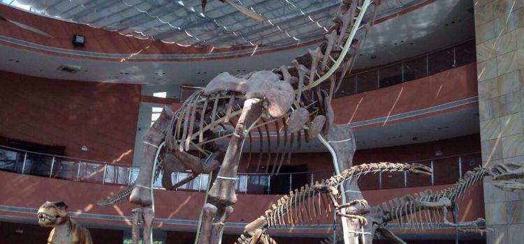 Heyuan City Museum (Heyuan Dinosaur Museum)2