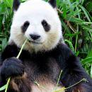 타이베이 근교 동물원 & 석정 단독 투어 (타이베이 출발)