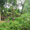 All-Inclusive Chengdu Highlight Panda Trip and Customizable Sites