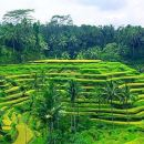 Private Ubud Tour Package All Ticket Include