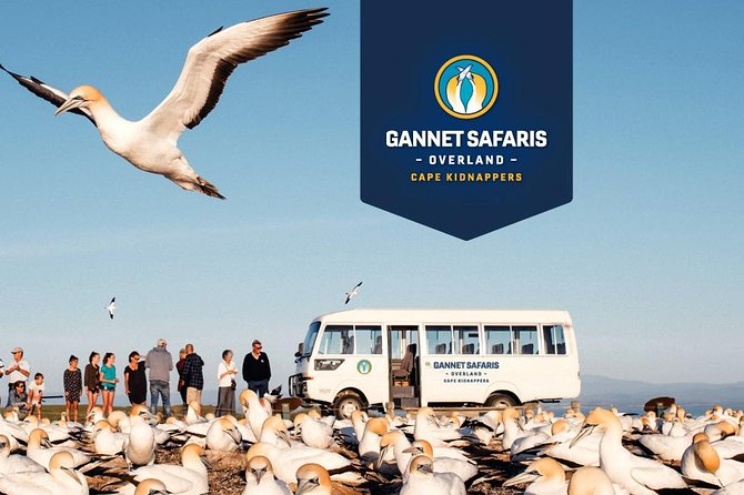 Gannet Safaris Overland tour to Cape Kidnappers Gannet Colony
