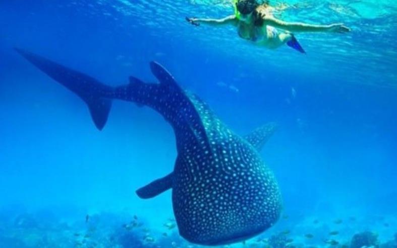 오슬롭 고래상어 일일투어 (두마게테 출발, 스노쿨링&투말록폭포)