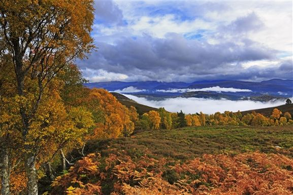 Visit Cairngorms National Park by train