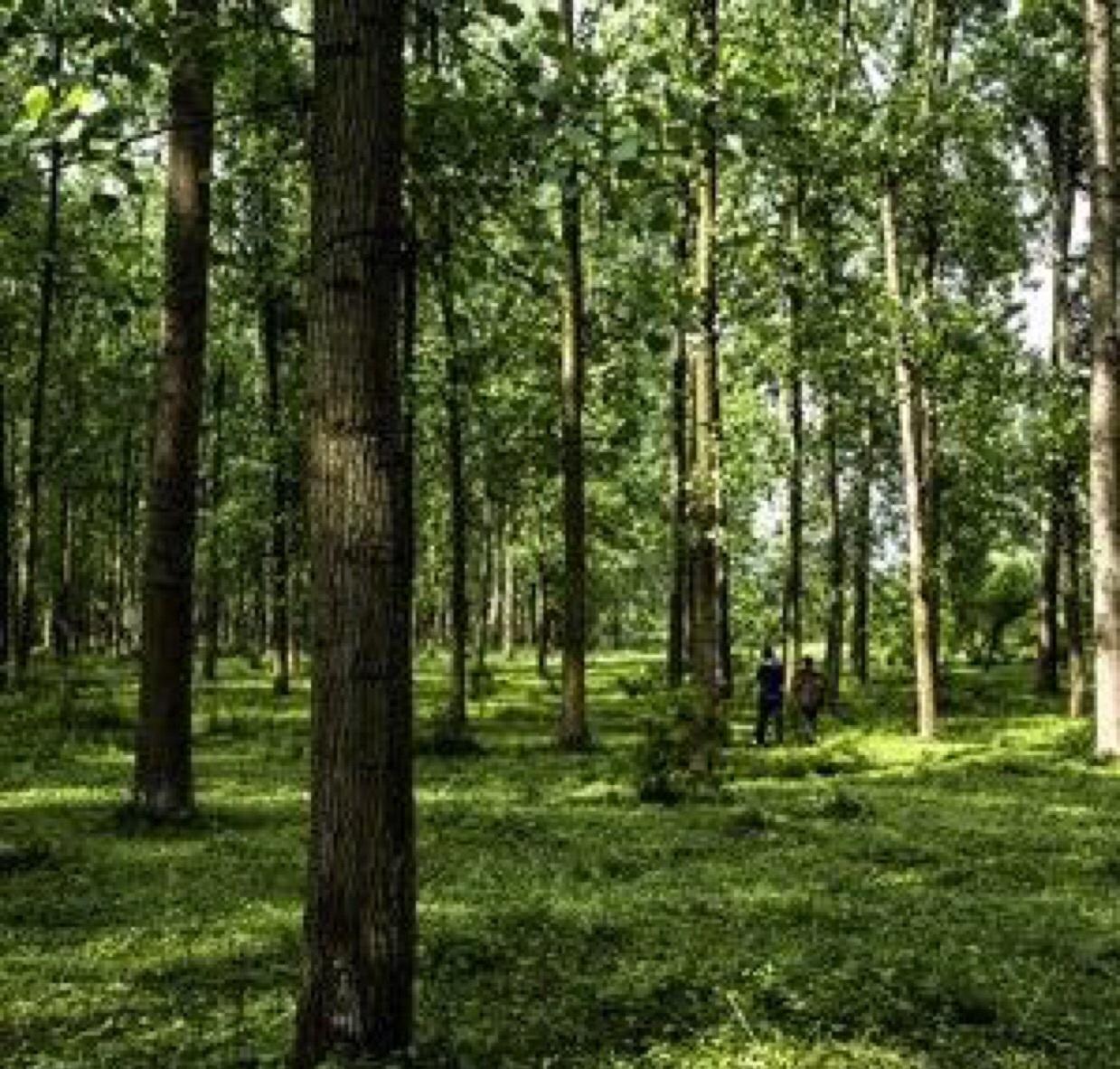 林间之拙木