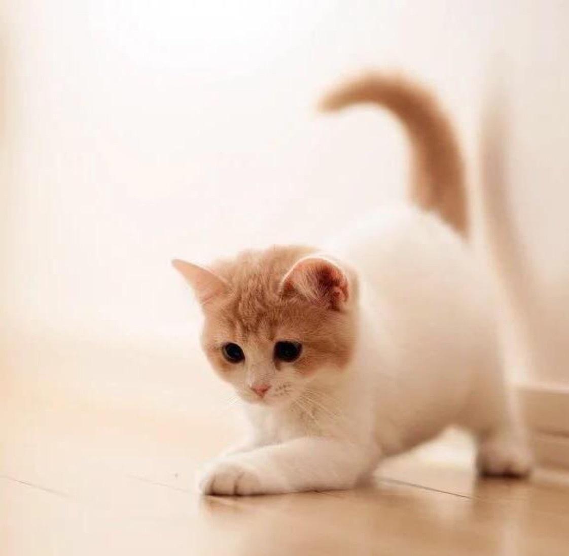 超级旅行猫