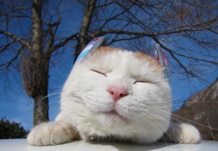 懒小猫猫猫