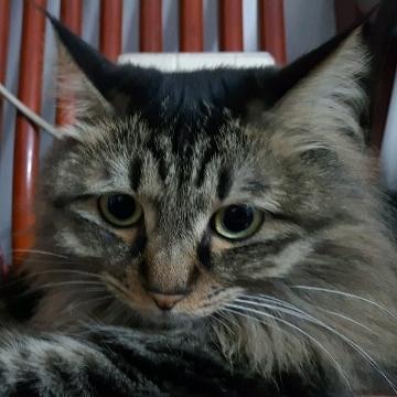 龙猫2018