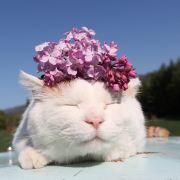 迷糊的加菲猫