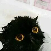 cat_in_black9