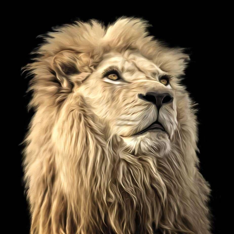 狮子7711