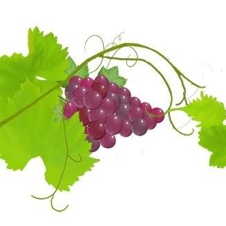 葡萄与枝子