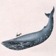 孤单的神仙鱼