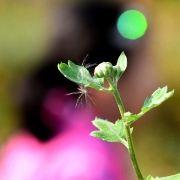 野猪林摄影