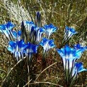 自由的春天