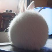 -无敌兔-