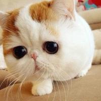 cut斑斑猫