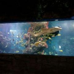 無錫海底世界用戶圖片