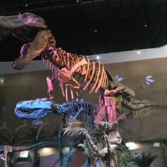 주청 공룡 세계 여행 사진