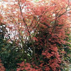 Lonchahuahai Camellia Garden User Photo