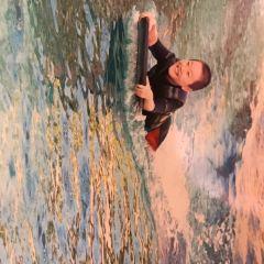 Dolphin Island User Photo