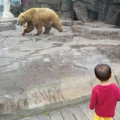 Chengdu Haichang Polar Ocean Park User Photo