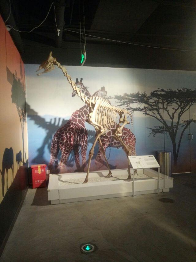 생명의 신비 박물관