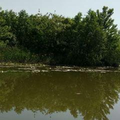 運河濕地公園用戶圖片