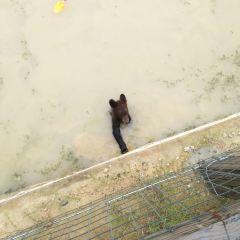 宿州野生動物園用戶圖片