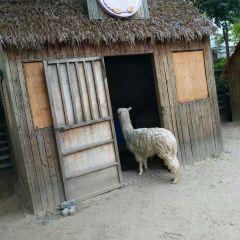 정저우 동물원 여행 사진
