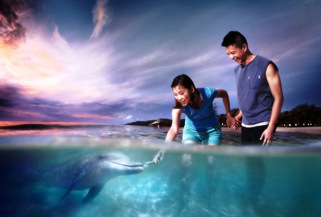 摩頓島海豚島餵食野生海豚+浪漫夕陽一日遊(布里斯班/黃金海岸出發+熱門活動四送一)