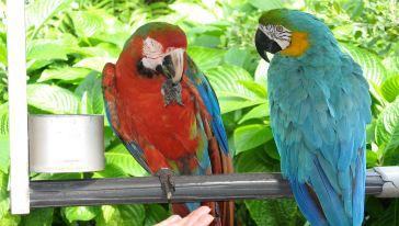 迈阿密丛林岛5